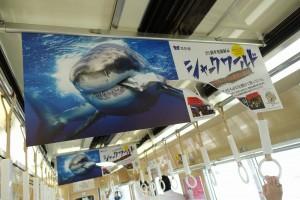 150731_shark1
