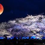 月食花見が見られる時間は?各地域のおすすめスポットを公開!