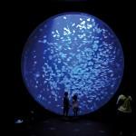 クラゲ水族館こと鶴岡市立加茂水族館空いている時間帯は?